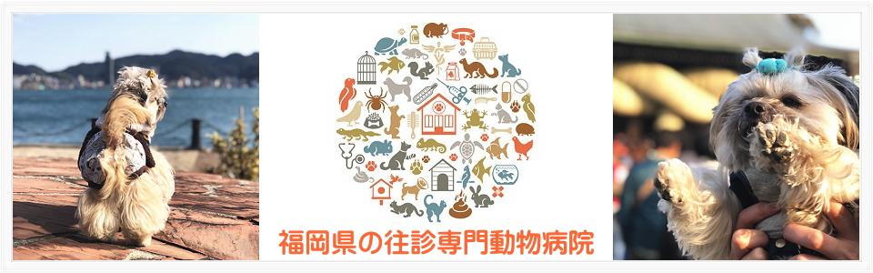 ホームケア動物病院は福岡県古賀市にある在宅診療と夜間救急の往診専門動物病院です。